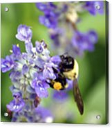 Collection Of Pollen Acrylic Print