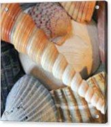 Collection Of Shells Acrylic Print