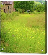 Collection Of Wildflowers Acrylic Print