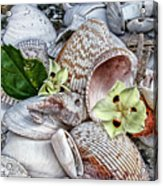 Collections Acrylic Print