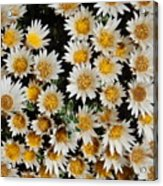Collective Flowers Acrylic Print