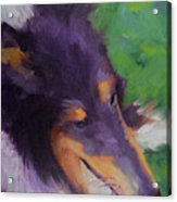 Collie Girl Siena Acrylic Print