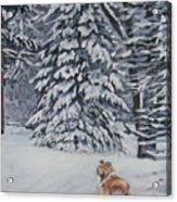 Collie Sable Christmas Tree Acrylic Print