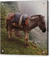 Colombian Burro In The Fog Acrylic Print