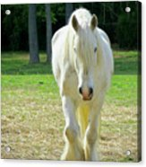 Colonial Horse In Williamsburg Acrylic Print