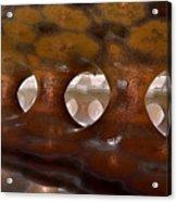 Colonnade Mysteria Acrylic Print