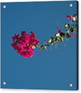 Color And Sky Acrylic Print