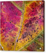 Color And Texture Acrylic Print