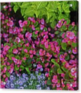 Color Combination Flowers Cc73 Acrylic Print