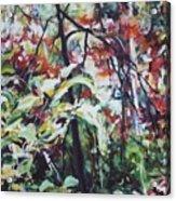 Color Gone Wild Acrylic Print