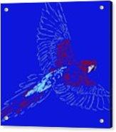 Color In Flight Acrylic Print