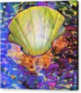 Color In Shell Acrylic Print