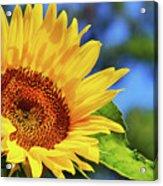 Color Me Happy Sunflower Acrylic Print