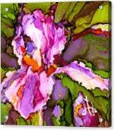 Color Me Iris Acrylic Print