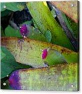 Color Me Purple Acrylic Print