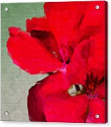 Color Me Red Acrylic Print