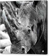 Color Me Rhino Acrylic Print