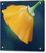 Color Of Love Acrylic Print