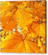 Color Of The Leaves Acrylic Print