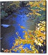 Color On Big Cataloochee Creek Acrylic Print