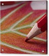 Color Pencil Drawing Acrylic Print