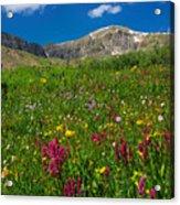 Colorado 14er Handies Peak Acrylic Print