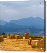Colorado Agriculture Farming Panorama View Pt 2 Acrylic Print