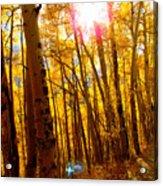 Colorado Aspen Gold 3 Acrylic Print