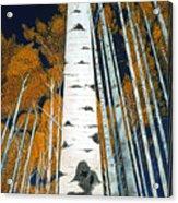Colorado Aspens Acrylic Print