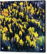 Colorado Autumn #5 Acrylic Print