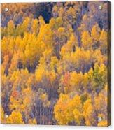Colorado Autumn Trees Acrylic Print