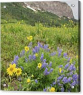 Colorado Color #4 Acrylic Print