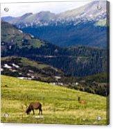 Colorado Elk Acrylic Print by Marilyn Hunt