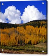 Colorado Fall 2 Acrylic Print