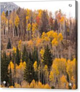 Colorado Fall Foliage Acrylic Print
