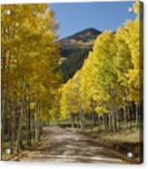 Colorado Fall Splendor Acrylic Print