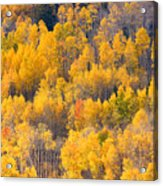 Colorado High Country Autumn Colors Acrylic Print