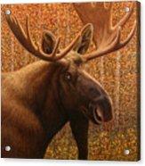 Colorado Moose Acrylic Print by James W Johnson