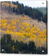 Colorado Mountain Aspen Autumn View Acrylic Print