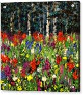 Colorado Rockies Wildflowers Acrylic Print