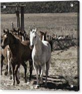 Colorado Run Acrylic Print
