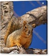 Colorado Squirrel Standoff Acrylic Print