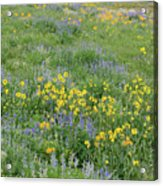 Colorado Summer Color Acrylic Print