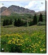 Colorado Wildflower Spectrum Acrylic Print