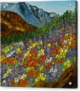 Colorado Wildflowers Acrylic Print