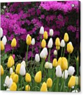 Colorful Spring Acrylic Print
