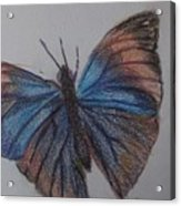 Colored Butterfly Acrylic Print