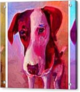 Colored Dog Strip Acrylic Print