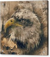 Colored Etching Of American Bald Eagle Acrylic Print