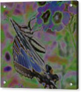 Colorflow Butterfly Acrylic Print